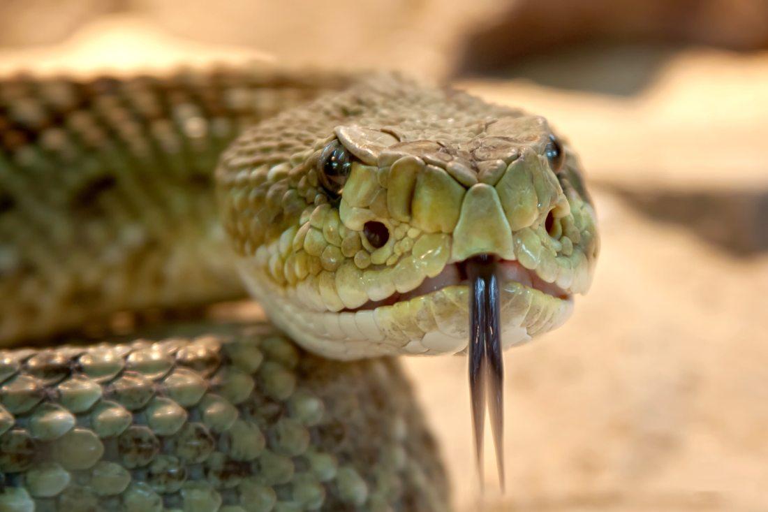 animal-dangerous-evil-38438
